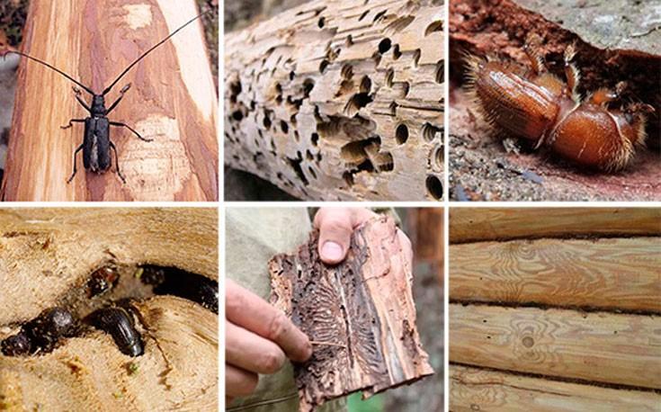 Обработка от короеда в Рязани