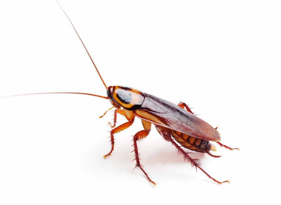 Средство от тараканов 50 мл
