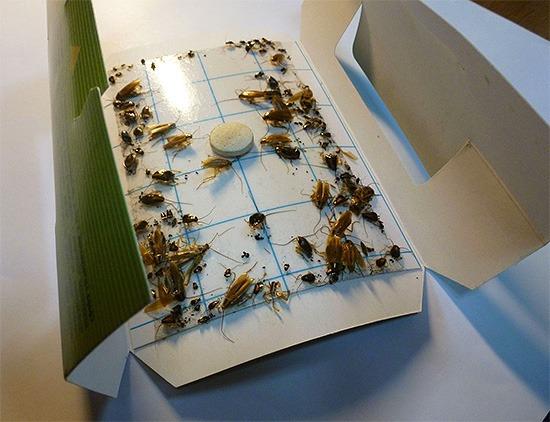 Клеевая ловушка от тараканов Форссайт