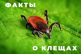 Наша реальная история о клещах, Елена (Рязань), автор статьи.