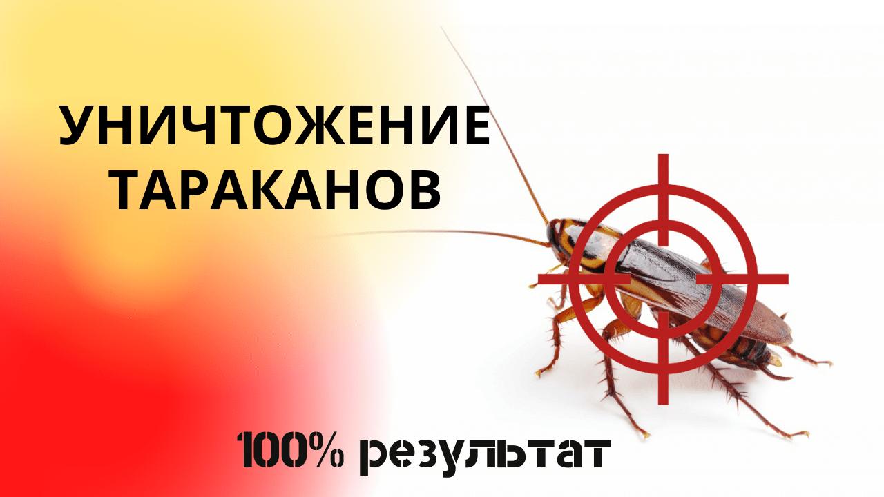 Уничтожение тараканов. 100% результат. Видео
