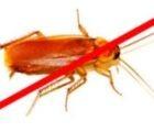 дезинфекция от тараканов